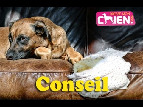 comment punir ou gronder son chien destructeur a la maison youtube. Black Bedroom Furniture Sets. Home Design Ideas