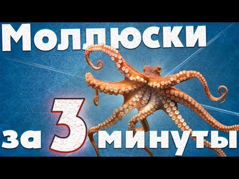 Моллюски. Мини-урок. Биология за 3 минуты.