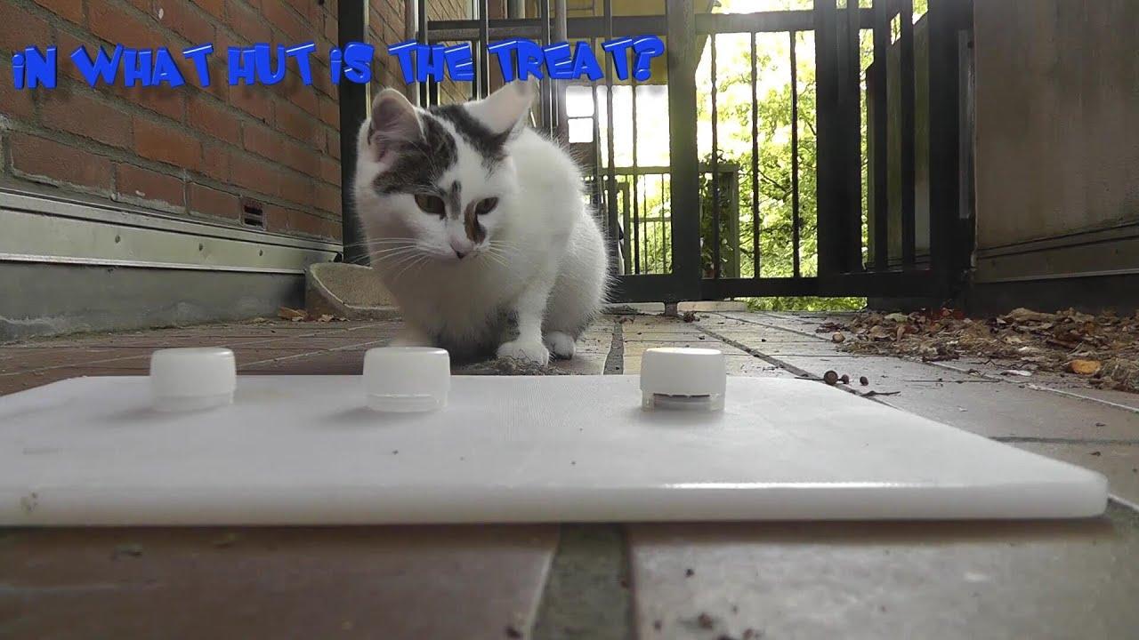 Berühmt Katze 6 Drahtkonfiguration Ideen - Die Besten Elektrischen ...