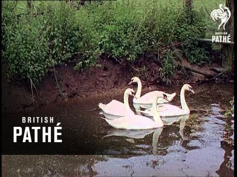 Wildfowl Trust Beware - Other Colour Pics Share This Title (1967)