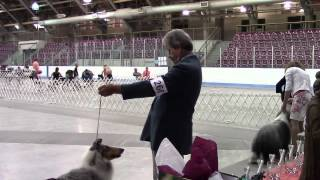 London Canine Association Group 7 Herding July 12, 2014