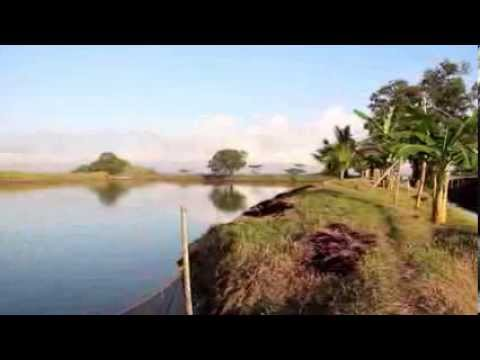 Land for sale in Brgy. Mambugsay, Cauayan, Negros Occidental, Philippines