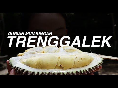 Jawa Pos Belah Durian Episode 9: Durian Munjungan Trenggalek