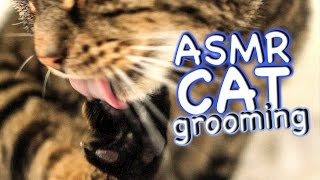 ASMR Cat - Grooming #30
