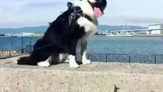 Instagramで毎日投稿しているノリノリ犬が100回を超えたので、記念にま...
