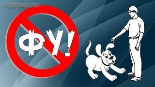 видео Черный список методов обучения собаки