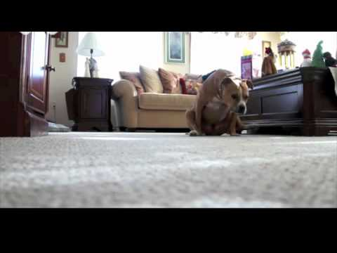 Funny Commercials Resolve Carpet Cleaner Dog Drag Butt - Demo - YouTube