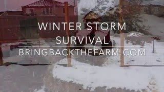 7 Insights to Surving a Winter Storm
