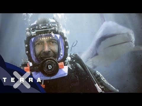 Macht Menschenblut Haie Verrückt? | Dirk Steffens