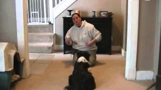 Private At Homedog Training Dayton, Ohio