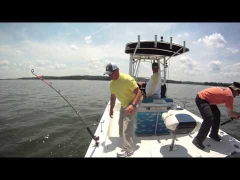 Bigfishheads umbrella rigs striped bass fishing on lake for Lake oconee fishing