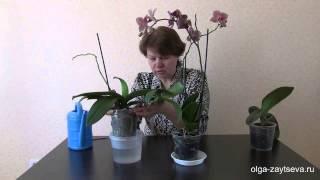 Как поливать орхидеи(Как поливать орхидеи. Методов полива орхидей- масса. Поливать орхидеи можно как угодно- в кухне под краном,..., 2014-08-10T11:29:27.000Z)