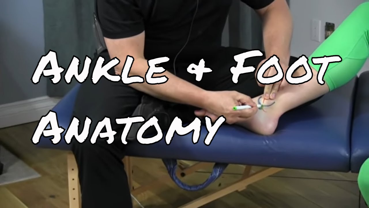 Anatomy of the Medial Ankle & Foot - YouTube