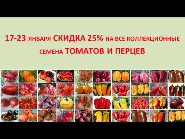 Неделя низких цен (17-23 января): скидка 25 % на все коллекционные семена томатов и перцев!