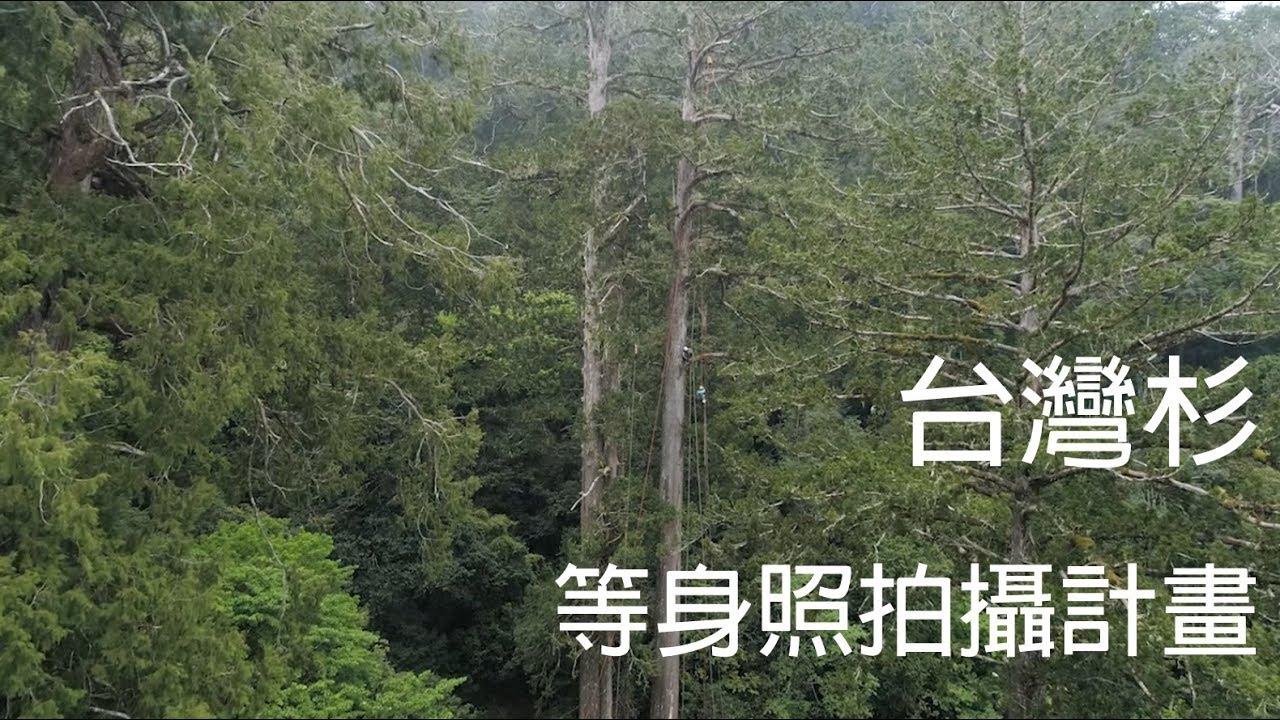 「撞到月亮的樹」臺灣杉等身照拍攝計畫 棲蘭臺灣杉三姐妹 - YouTube