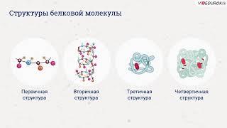 Видеоурок по биологии