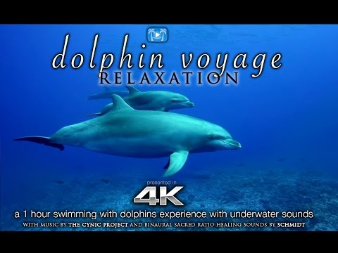 4K DOLPHIN VOYAGE Relaxation + Music | 1 HR Healing Nature Video W/ Binaural Sounds For Meditation