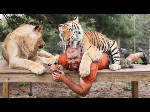 Thumbnail: Big Cat Enthusiast Owns Six Tigers And Two Lions