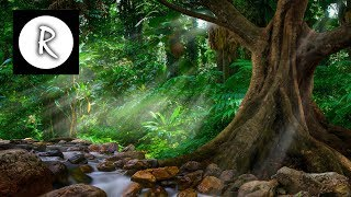 Rainforest Reverie - Dark Screen - exotic ambience of a beautiful rainforest - 11 hours -