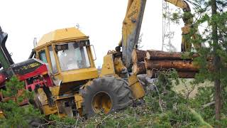 Salvage Logging