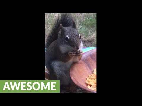Woman feeds and talks with friendly wild squirrel