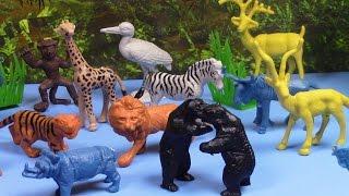 Animal World Collection Colección Mundial de los Animales