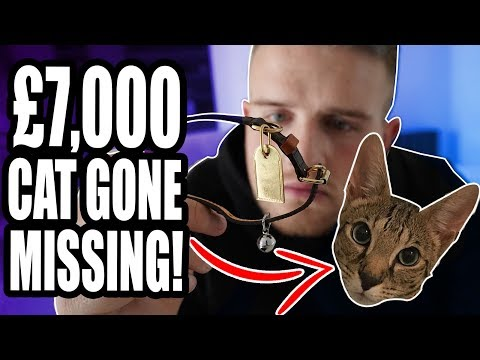 Thumbnail: I LOST MY £7000 CAT! NOT A **PRANK**