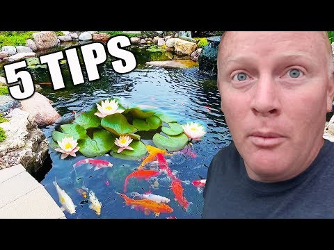 5 Tips For Water Lilies: How To Place Them In A Pond