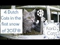 Life of Cats // ❄Snow Cat Edition!🌨 // 🇳🇱Dutch Cat Vlog📹 // Maine Coon😻 // KanD Cats😽