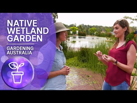 Native Wetland Habitat Garden