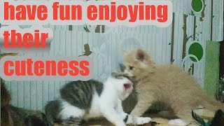 Cute kittens are playing Wingky and Po