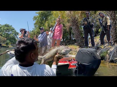 .50 Cal Air Rifle iguana Hunt GONE WRONG! SHERIFF CALLED AR-15 DRAWN!!!