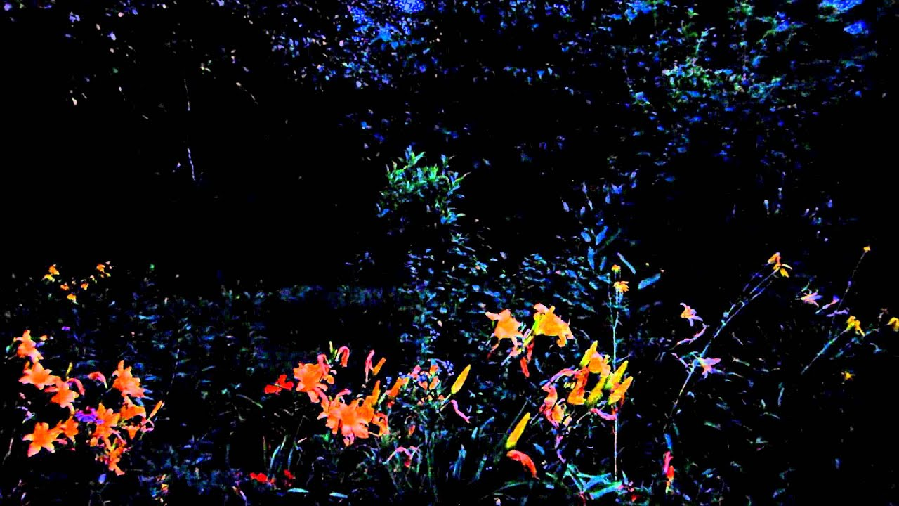 Amazing Firefly Garden