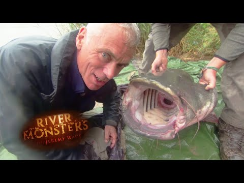 163lbs Wels Catfish! | CATFISH | River Monsters
