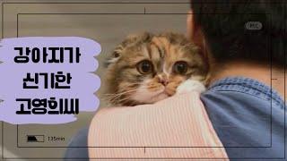 [먼지짜루] 고양이가 눈병에 걸렸어요 ㅜㅜ/고양이가 강…
