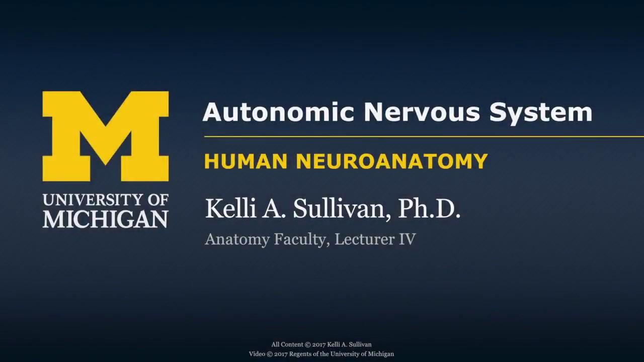 Nervous System: Autonomic Nervous System Introduction - YouTube