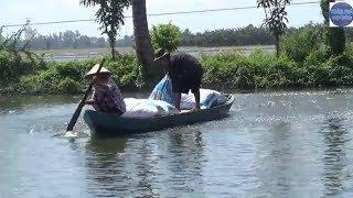 Nghề nuôi cá siêu lợi nhuận ở An Giang/adopt fish