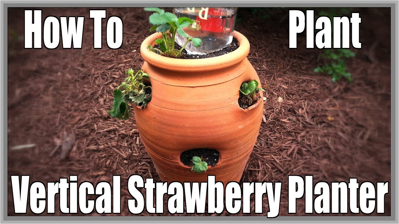 How To Plant Vertical Strawberry Planter Youtube