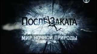 BBC После заката  Мир ночной природы  Серия №3 2012