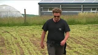 """Un agriculteur de la Creuse se lance dans la culture de cannabis """"thérapeutique""""."""
