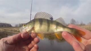 МИКРОДЖИГ на малой реке ЖОР ОКУНЯ ВЕСНОЙ Рыбалка на спиннинг Эта приманка опять выручила