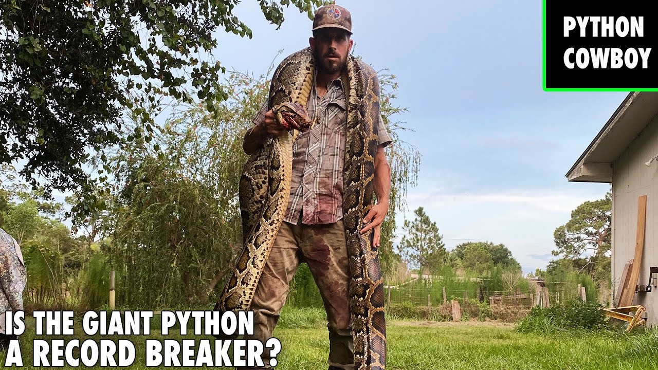 Moment Of Truth Is The Giant Python A Record Breaker