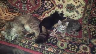 Мурка, Оззи, Маша для Авито