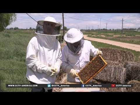 Bees Crisis hits US economy