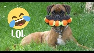Pets Funny Moments Compilation - 2019