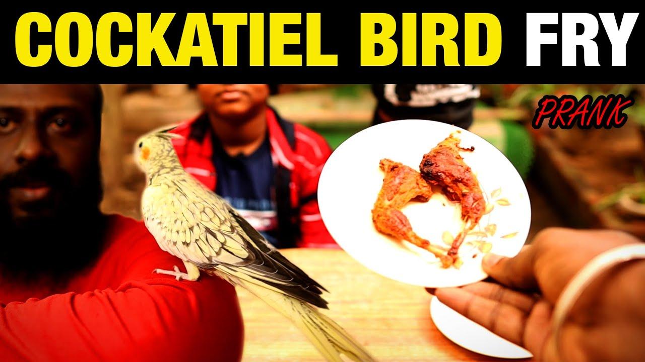 Cockatiel Bird Fry  Very Funny Prank ever | Love Bird | Pet | Prank | தமிழ் | Tamil | UV360