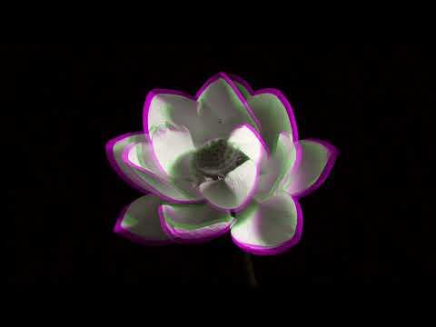Logistics - Lotus Flower (Official Music Video)