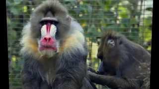san diego zoo panda cam |san diego zoo safari park |tong6666