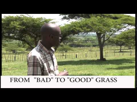 FARMERS CHECK: FROM 'BAD' TO 'GOOD' GRASS