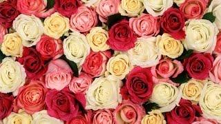 Купити гарні квіти троянди весільні букети Київ ціни недорого Brillion Club
